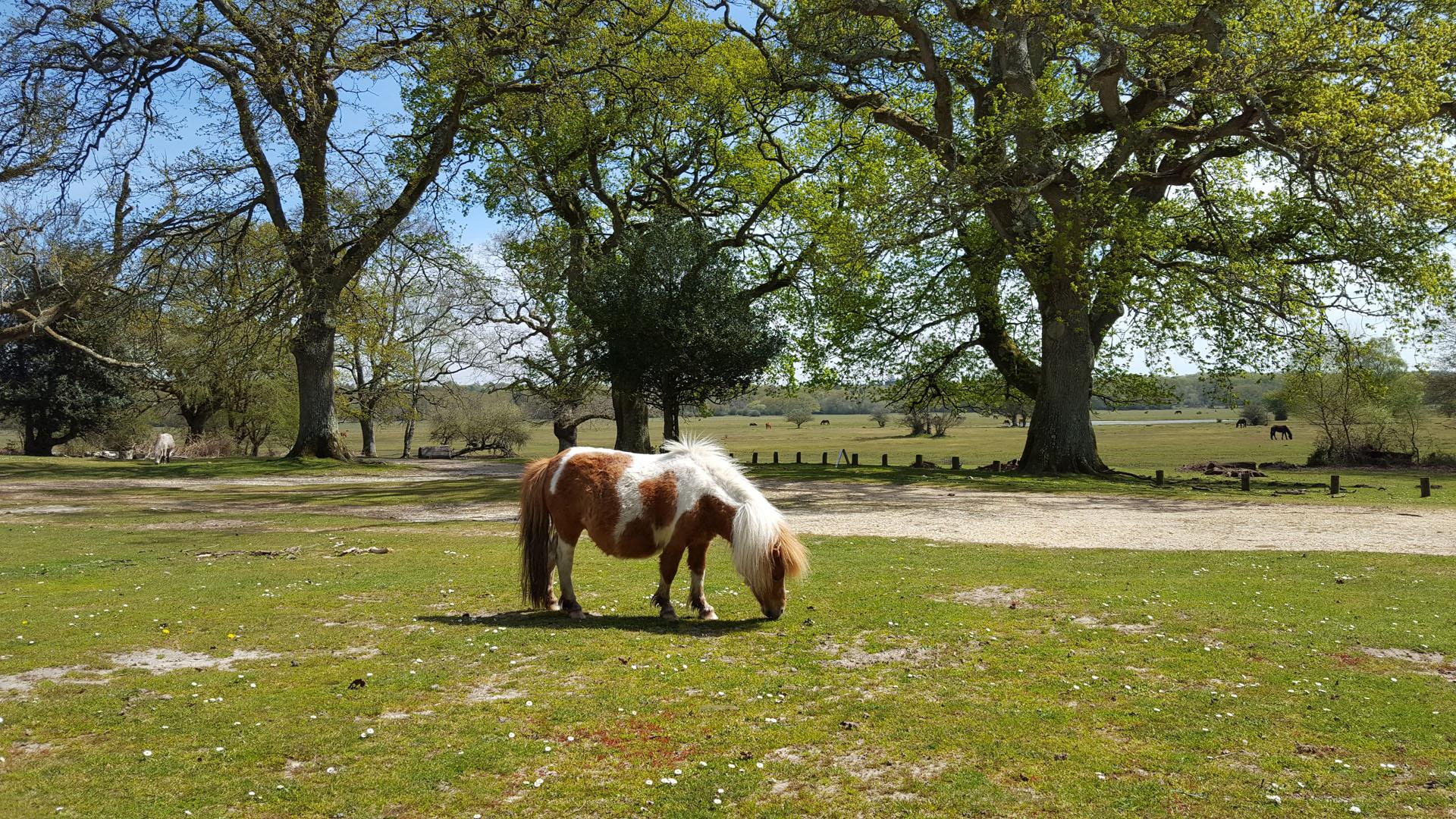 hollands-wood-pony